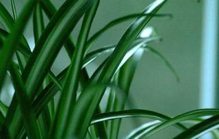 nature, vitalité, croissance, vert