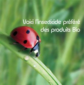 printemps-bio-coccinelle