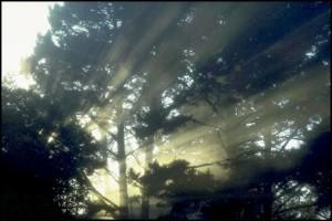 image-lumiere-arbre